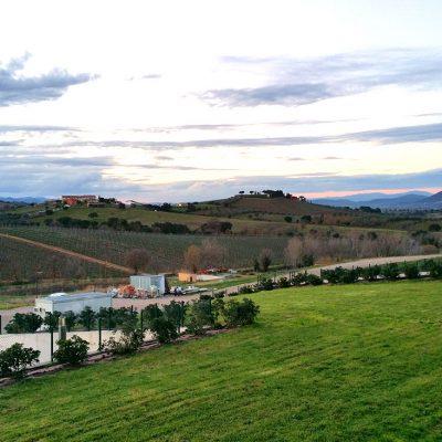 Cantina Val delle Rose S.r.l. società agricola